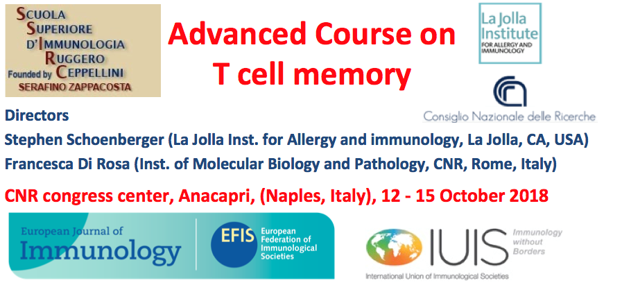 T cell memory