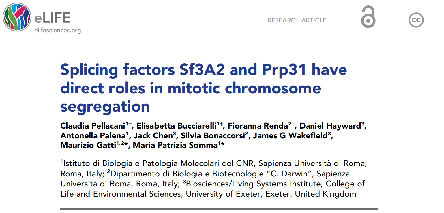 Splicing factors Sf3A2 and Prp31 have direct roles in mitotic chromosome segregation